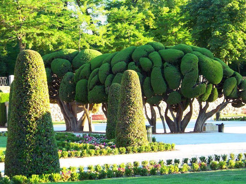 Parque del retiro, madrid, árboles