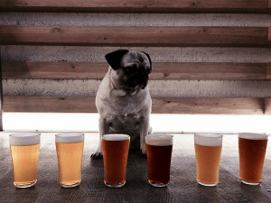cervezas, Fábrica Maravillas, Irreale, cervezas artesanales, cervezas La Virgen, La Tape