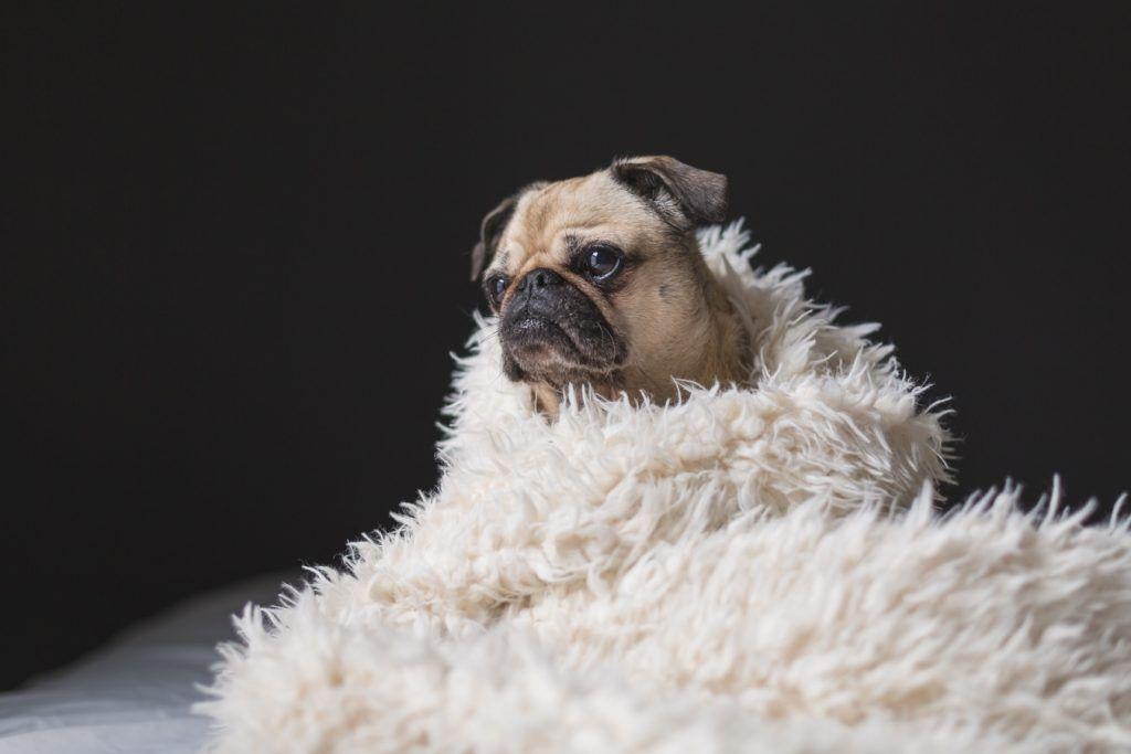 mascotas,cuidados,coronavirus