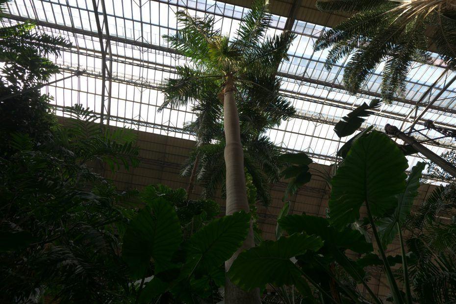 jardin-tropical-invernadero-de-atocha