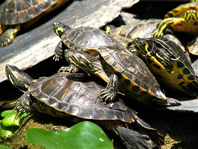 tortugas-estacion-atocha