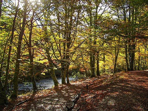 madrid-en-otoño-fotos
