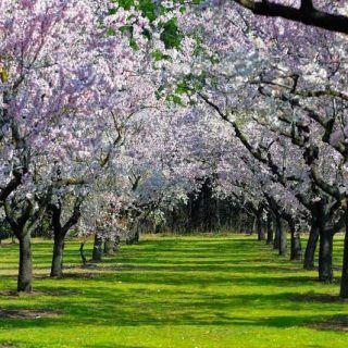 Disfruta de un paseo virtual por los parques y jardines de Madrid y vive la primavera desde casa!! 🌺🌼🌺 Toda la info en nuestro blog: madridandyou.com/un-paseo-virtual-por-los-parques-de-madrid/